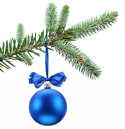 Christmas ball on fir branches  Isolated on white