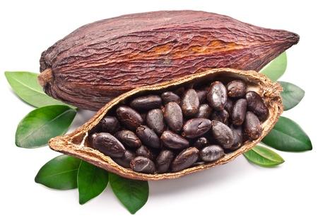 Cocoa pod on a white background.