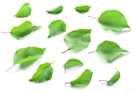 Apricot leaves on the white background.