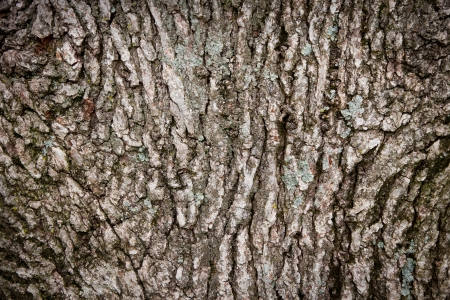 Old oak tree bark nature background texture pattern