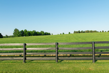 Green pastures of horse farms with black wooden fence  Country summer landscape