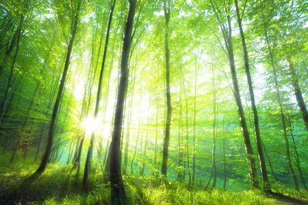 Foto de Sunlight in the green forest, spring time - Imagen libre de derechos