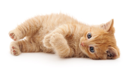Red kitten lying isolated on a white background.