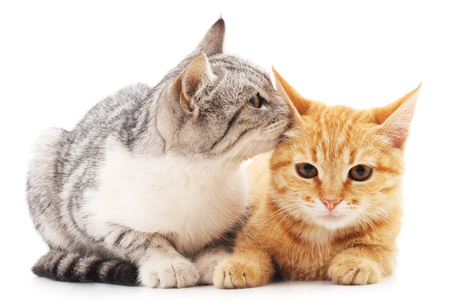 Photo for Two little kittens isolated on a white background. - Royalty Free Image
