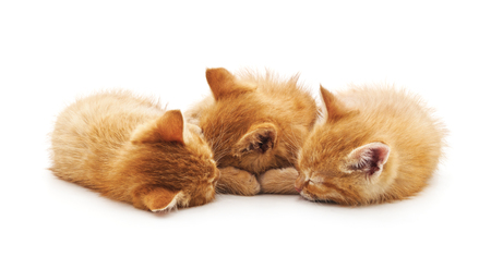 Photo pour Three small kittens isolated on a white background. - image libre de droit