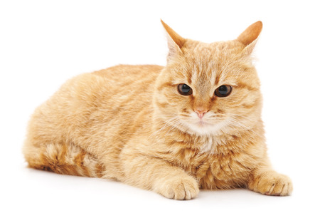 Photo pour One scared cat isolated on a white background. - image libre de droit