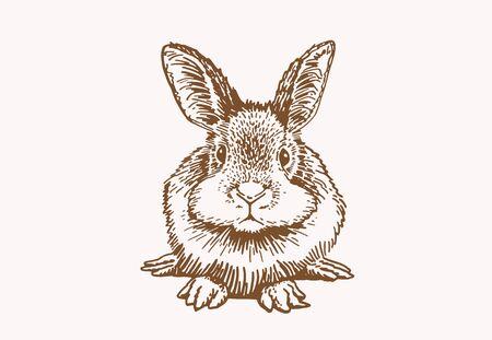 Illustration pour Graphical sepia sketch of bunny, illustration - image libre de droit