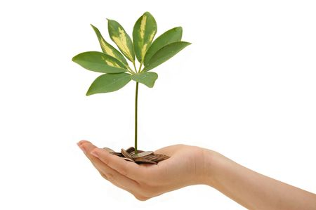 plant and coins in hand on white background