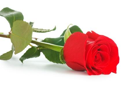 Foto de Red rose isolated on white background - Imagen libre de derechos