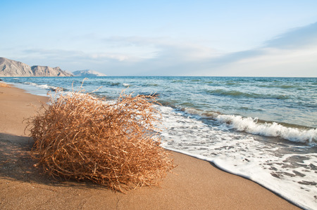 tumbleweed on the beach in the photo