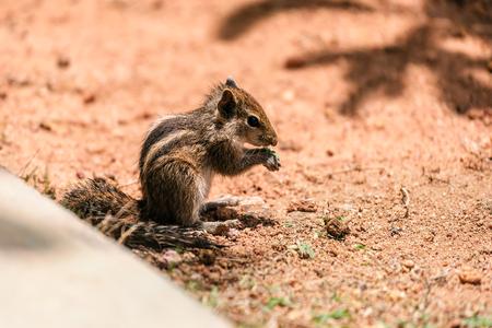 portrait of live cute chipmunk