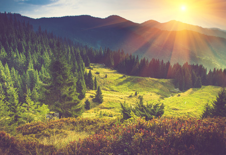 Photo pour Beautiful summer landscape in the mountains at sunshine. - image libre de droit
