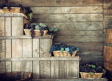 Various grapes in wicker baskets. Harvesting theme. Retro photo.の写真素材