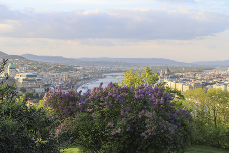 Hungary, blooming lilac bushes and view from Gellert hill on the Budapest city in spring