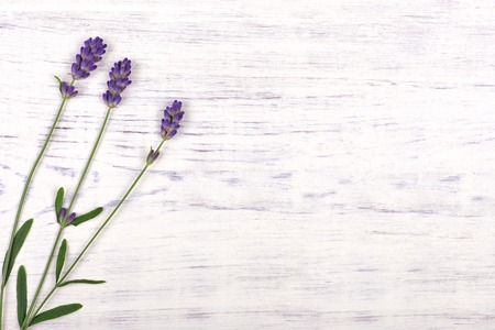 lavender flowers on white wood table background, top view