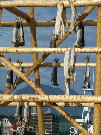 Dry fish on a wooden rack in Husavik Norway