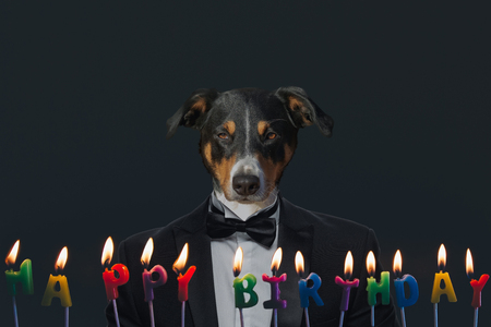 Foto de Dog in a business suit celebrating his birthday party, Appenzeller Sennenhund. - Imagen libre de derechos