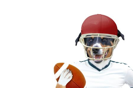 Photo for funny american football rugby dog - Royalty Free Image
