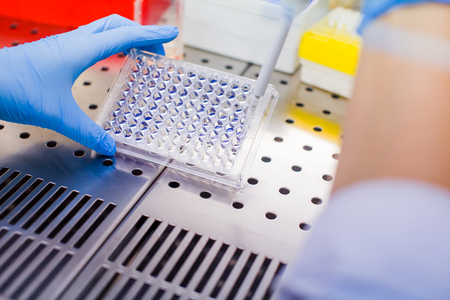 Photo for Scientist researching in laboratory, pipetting cell culture medium samples in laminar flow - Royalty Free Image