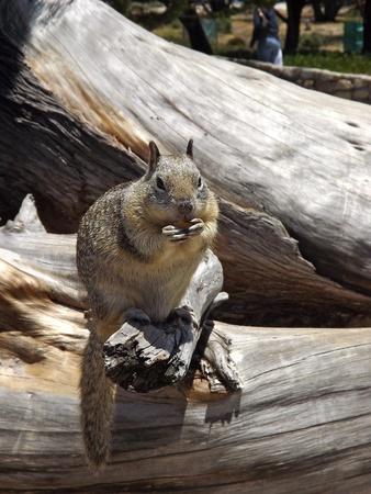Squirrel Having a Snack