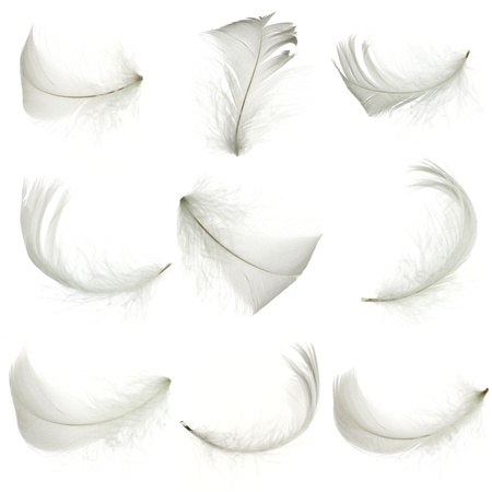 Set of white feather, isolated