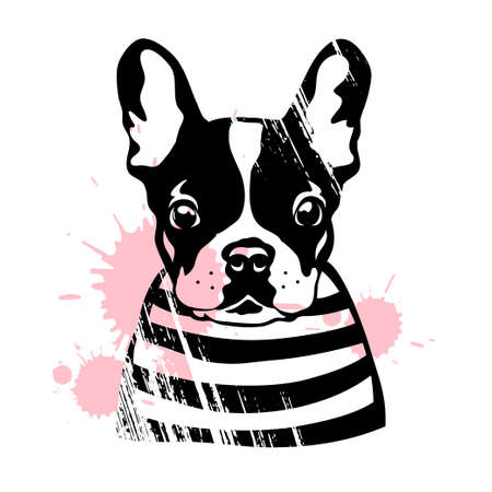 Illustration pour French bulldog. Cute black and white dog in a striped sweater. Vector illustration - image libre de droit