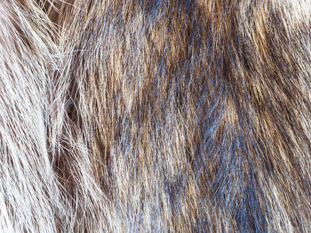 textile background - hairs of raccoon fur close up