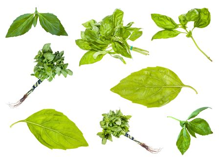 Photo pour Set of fresh green basil herbs isolated on white - image libre de droit