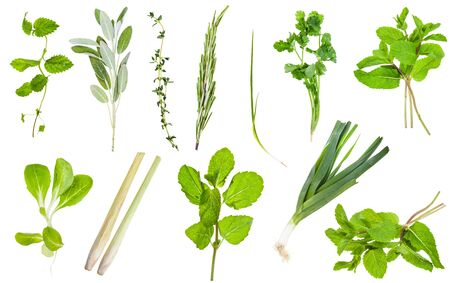 Photo for Various fresh twigs of edible greens isolated on white - Royalty Free Image