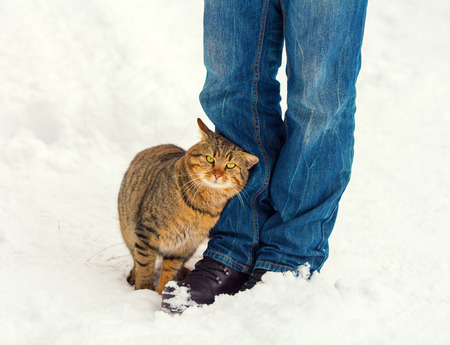 Сat rubbing against legs of a man outdoors in winter