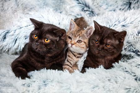 Tree kittens lying together on fir blanket
