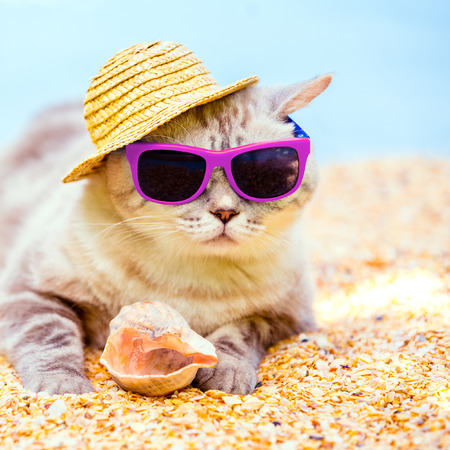 Photo pour Cat wearing sunglasses and sun hat relaxing on the beach - image libre de droit