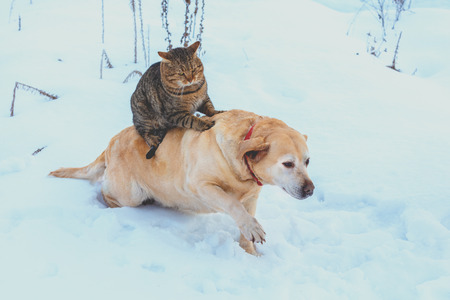 Photo pour Funny cat and dog are best friends. Cat riding the dog outdoors in snowy winter - image libre de droit