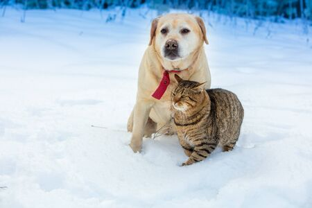 Photo for Cat and dog - best friends play together in the snow - Royalty Free Image