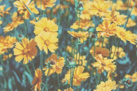 Photo pour Vintage blossoming flowers in the summer garden. Flowers nature background - image libre de droit