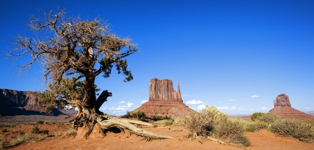 Panoramic view of Monument Valley and tree, USA