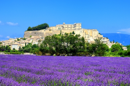 lavender field and old town