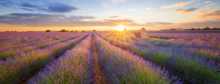 Photo pour Panoramic view of lavender filed in Valensole. Provence, France - image libre de droit