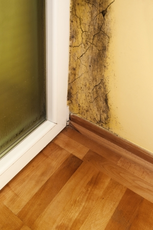 Moisture and mold -Problems in a house