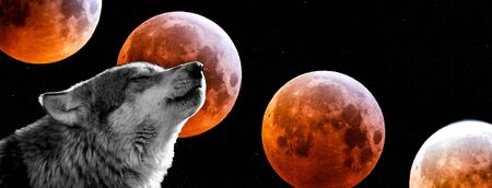 Photo for Wolf with a bloodmoon in background - Royalty Free Image
