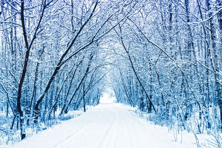 Photo for Winter - Royalty Free Image