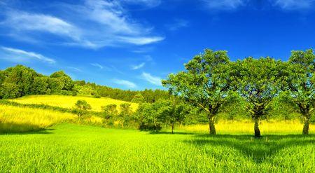Photo pour Summer landscape - image libre de droit