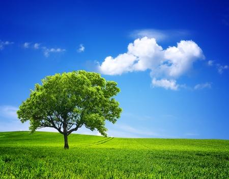 Photo pour Nature Environment - image libre de droit