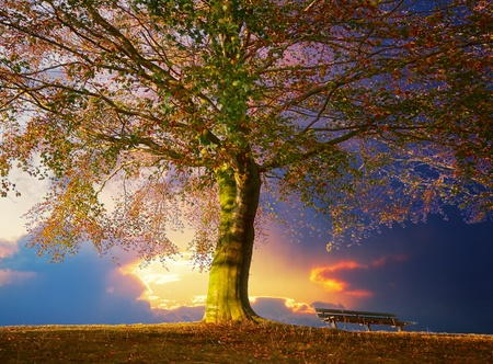Photo for Tree in the park - Royalty Free Image