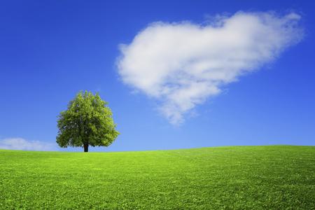 Foto de Lonely tree on the field - Imagen libre de derechos