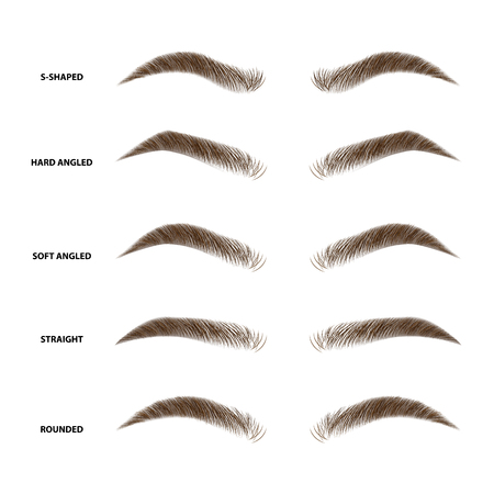 Ilustración de Types of eyebrows vector illustration - Imagen libre de derechos
