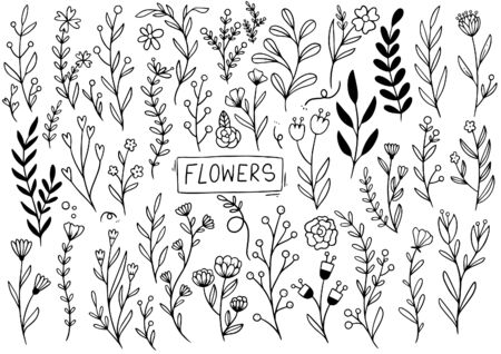 Photo pour collection forest fern eucalyptus art foliage natural leaves herbs in line style. Decorative beauty elegant illustration for design hand drawn flower - image libre de droit