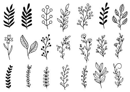 Illustration pour collection forest fern eucalyptus art foliage natural leaves herbs in line style. Decorative beauty elegant illustration for design hand drawn flower - image libre de droit