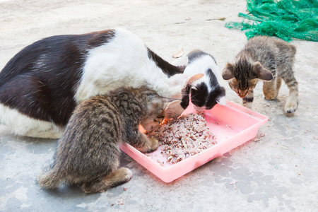homeless cat and little kitty eating rice on dish(Focus on rice)