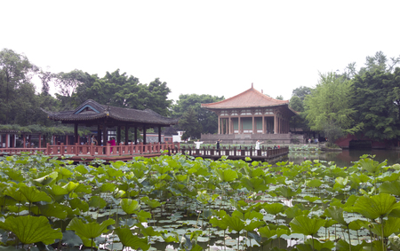 Looking at the lotus pond from the ancestral temple